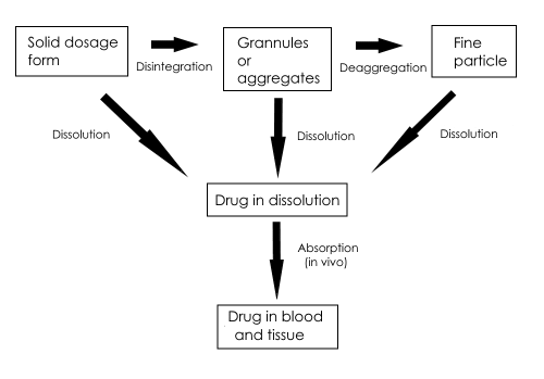 Schematic representation of tablet dissolution processes